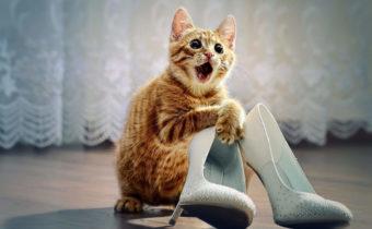 Кот пометил обувь
