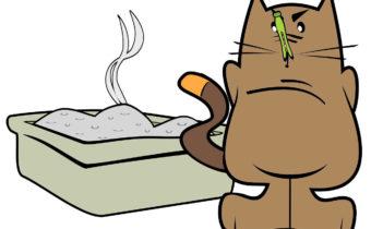 как избавиться от кошачьей мочи