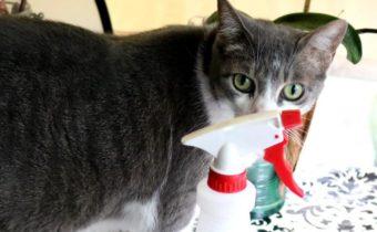 средства против запаха мочи и кот