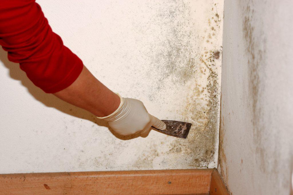 отдираем плесень от стен