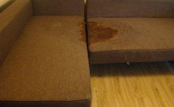 диван с пятном мочи кота