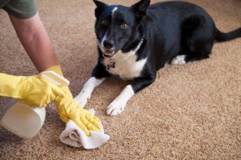 запах мочи домашних животных