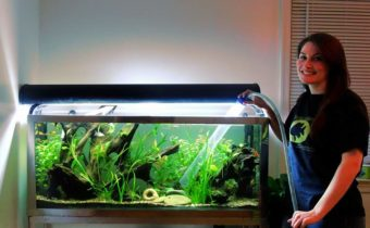 как почистить аквариум правильно