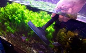 как почистить аквариум правильно скребком